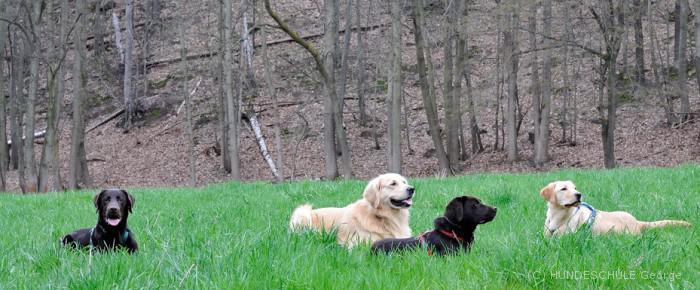 hund richtig trainieren