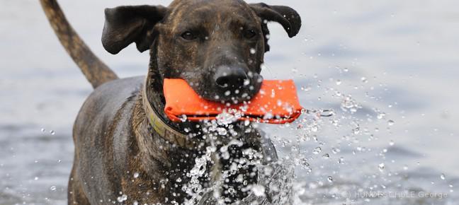 Hundeschule George - Kurs Apportieren